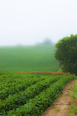 Photograph - Foggy Bean Field by Edward Peterson