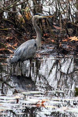 Art Print featuring the photograph Foggy Bog Heron by Kenny Glotfelty