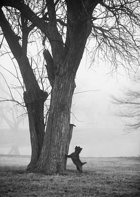 Photograph - Foggy Bottom by Heidi Marcinik