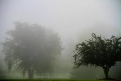 Foggy Country Landscape Art Print by Dan Sproul