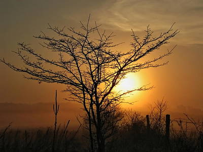 Photograph - Foggy Crabapple Tree by Dale Kauzlaric