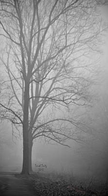 Photograph - Foggy Days by Trish Tritz