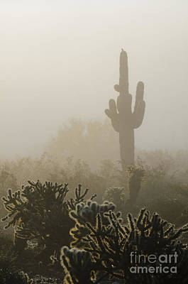 Photograph - Foggy Desert by Tamara Becker