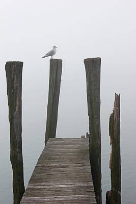 Photograph - Foggy Dock W Gul 3 by Mary Bedy