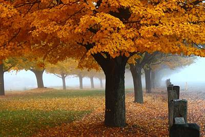 Foggy Fall Morning Art Print by Lynn Hopwood