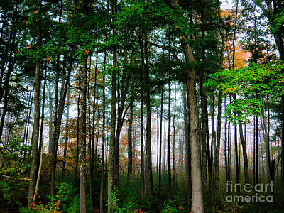 Photograph - Foggy Fall Morning by Nancie DeMellia