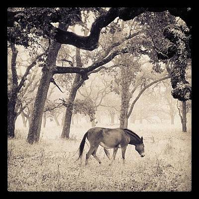 Horse Photograph - Foggy Field by CML Brown