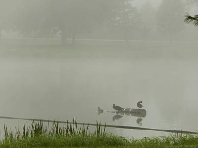 Photograph - Foggy Float by Wild Thing