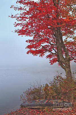 Maples Photograph - Foggy Forest Lake by Charles Kozierok