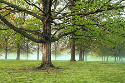 Photograph - Foggy Francis Park by Scott Rackers