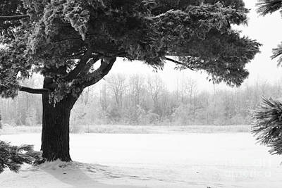 Foggy Icestorm Art Print by Sophie Vigneault