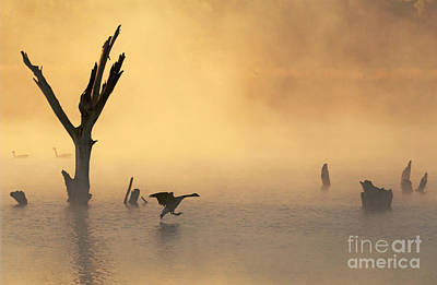 Photograph - Foggy Landing by Elizabeth Winter