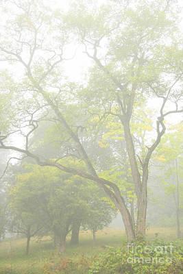 Photograph - Foggy Limbs by Frank Townsley
