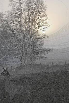 Photograph - Foggy Llama Sunset II by Kathy Sampson