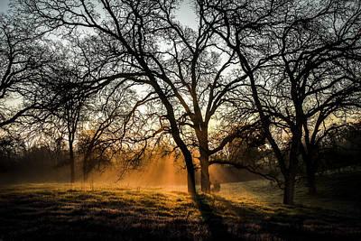 Foggy Morning 4 Art Print by Philip Tolok