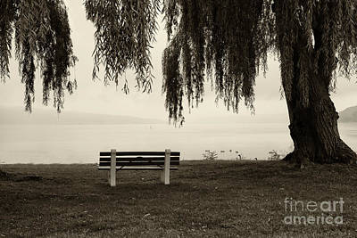 Foggy Morning At Stewart Park Art Print