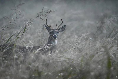 Autumn Scene Photograph - Foggy Morning Buck by Jai Johnson
