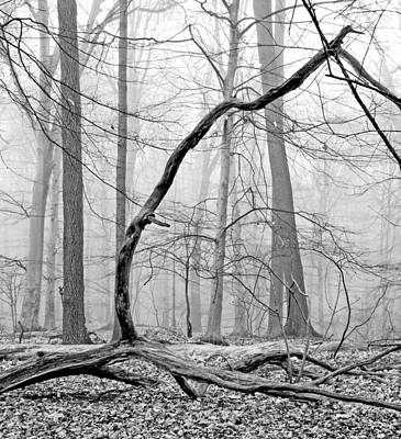 Foggy Morning Deciduous Forest Art Print by A Gurmankin