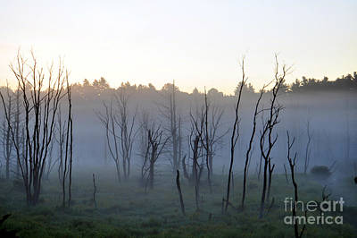 Photograph - Foggy Morning Forest by Staci Bigelow