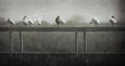 Photograph - Foggy Morning Lineup 2 by Deborah Smith