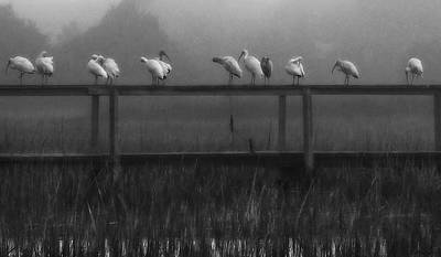 Photograph - Foggy Morning Lineup by Deborah Smith