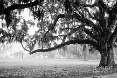 Photograph - Foggy Morning On Coosaw Plantation by Scott Hansen