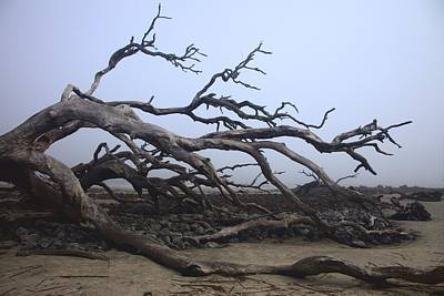 Photograph - Foggy Morning On Driftwood Beach by Gordon Elwell