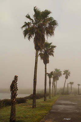 Photograph - Foggy Morning On Galveston Island by Allen Sheffield