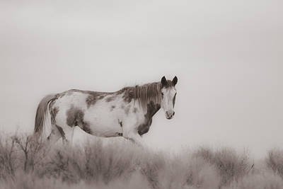 Forelock Photograph - Foggy Morning On The Steens D8701 by Wes and Dotty Weber