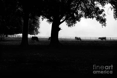 Foggy Morning Silhouette Pasture  Art Print by Jessie Paul