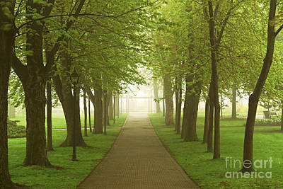 Perspective Photograph - Foggy Spring Park by Elena Elisseeva