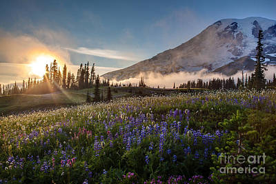 Washington Nationals Photograph - Foggy Rainier Sunset by Mike Reid