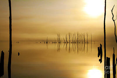 Photograph - Foggy Rise by Roger Becker