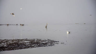 Photograph - Foggy Seabird Gathering  by Roxy Hurtubise