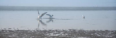 Photograph - Foggy Seabirds Low Tide Buffet by Roxy Hurtubise
