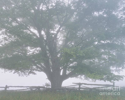 Photograph - Foggy Summer Morning by Alan L Graham