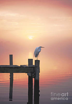 Photograph - Foggy Sunset On Egret by Benanne Stiens