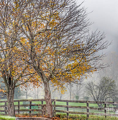 Photograph - Foggy Trees by Kerri Farley