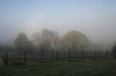 Photograph - Foggy Vineyard Morning by Jean Noren