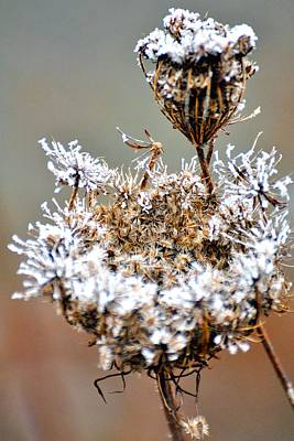 Jerry Sodorff Royalty-Free and Rights-Managed Images - Foggy Weeds 20663 by Jerry Sodorff