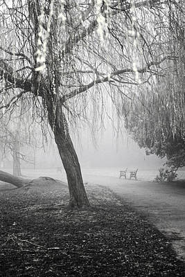 Photograph - Foggy Willow by Christopher Rees