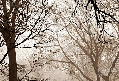 Photograph - Foggy Winter Afternoon In Sepia by Sarah Loft