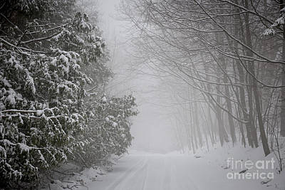 Foggy Winter Road Art Print by Elena Elisseeva