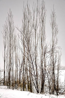 Jerry Sodorff Royalty-Free and Rights-Managed Images - Foggy Winter Tree Fence 13271 by Jerry Sodorff