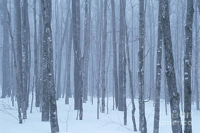 Photograph - Foggy Winter Woods by Alan L Graham