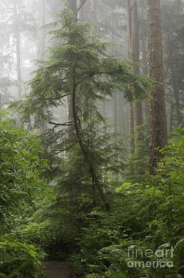Photograph - Foggy Woods by Sharon Seaward