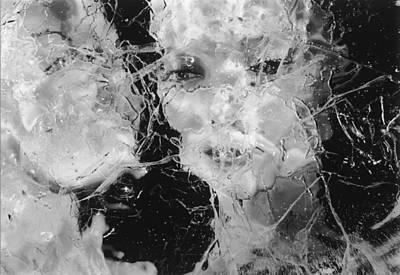 Photograph - Foiled Again by Michael Howard