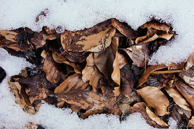 Photograph - Foliage And Snow by Matthias Hauser