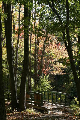Photograph - Foliage Bridge by Dan Poirier