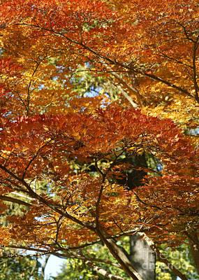 Photograph - Foliage Dream by Rudi Prott